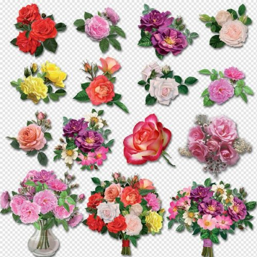 Free Flower Clipart No Backgrond