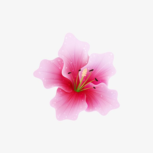 Flower Png Transparent Background Free Buckle Material in.