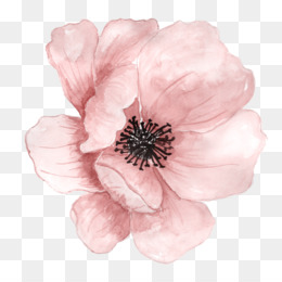 Flower Png & Free Flower.png Transparent Images #1776.