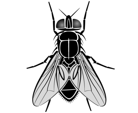 Fly Clipart Picture Free Download.