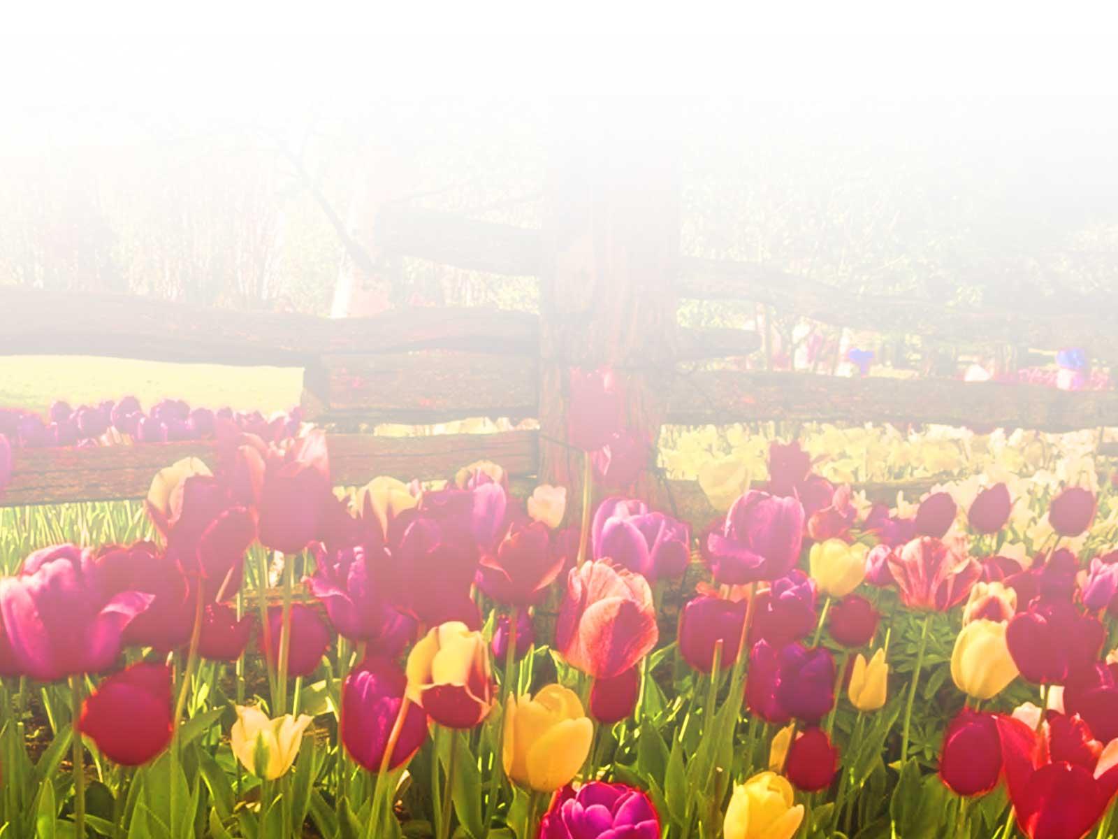 Flower Garden Backgrounds.