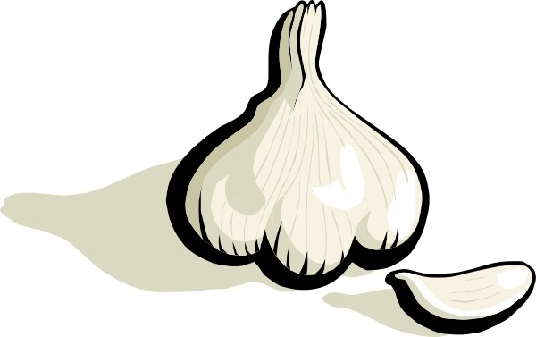 Garlic clip art Free vector in Open office drawing svg.