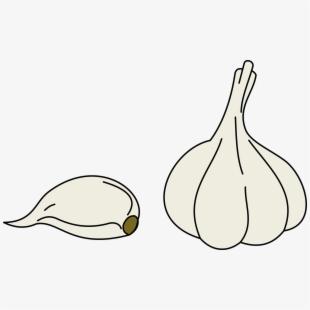 Illustration Garlic Vegetables.