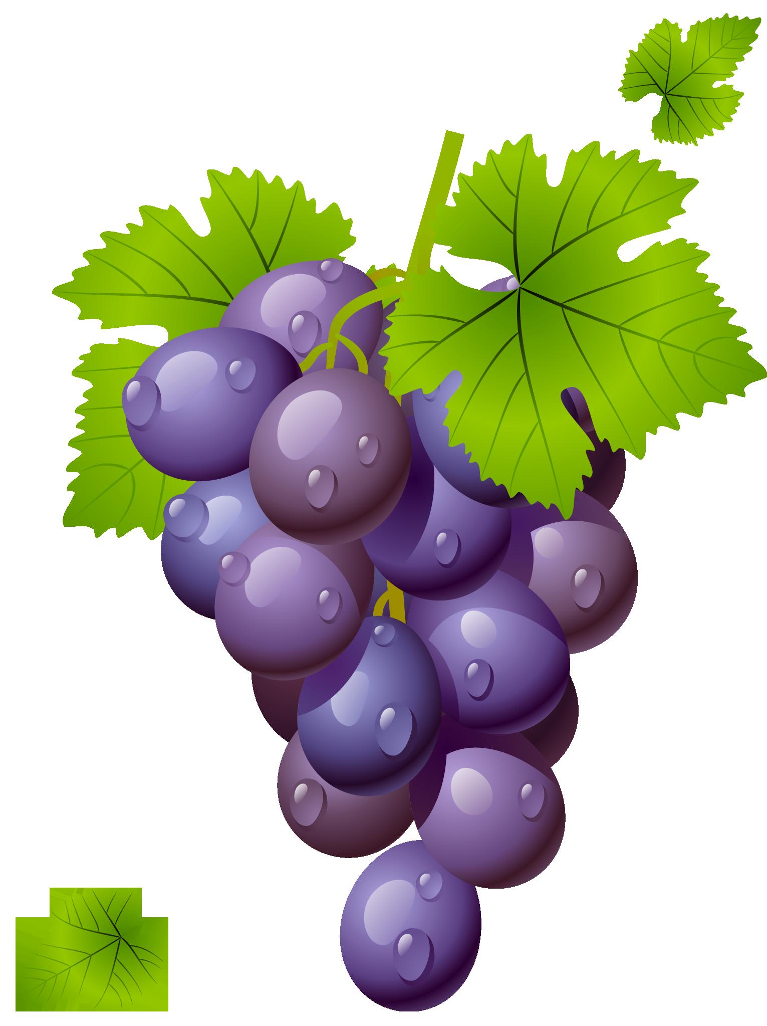 Grapes vine clipart free images 2.