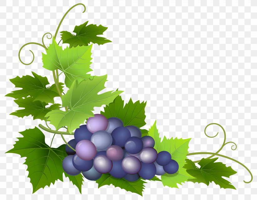 Common Grape Vine Wine Grape Leaves Clip Art, PNG.