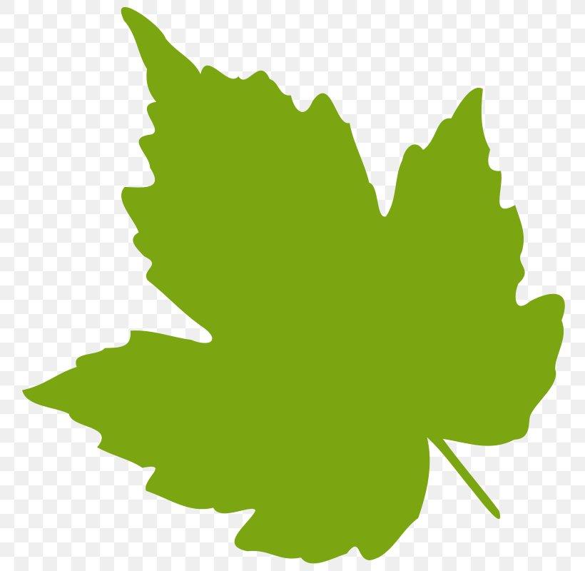 Grape Leaves Leaf Grapevines Clip Art, PNG, 800x800px, Grape.