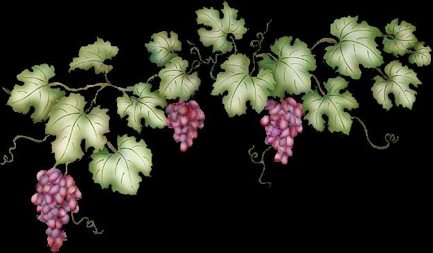 Free Cliparts Border Grapes, Download Free Clip Art, Free.