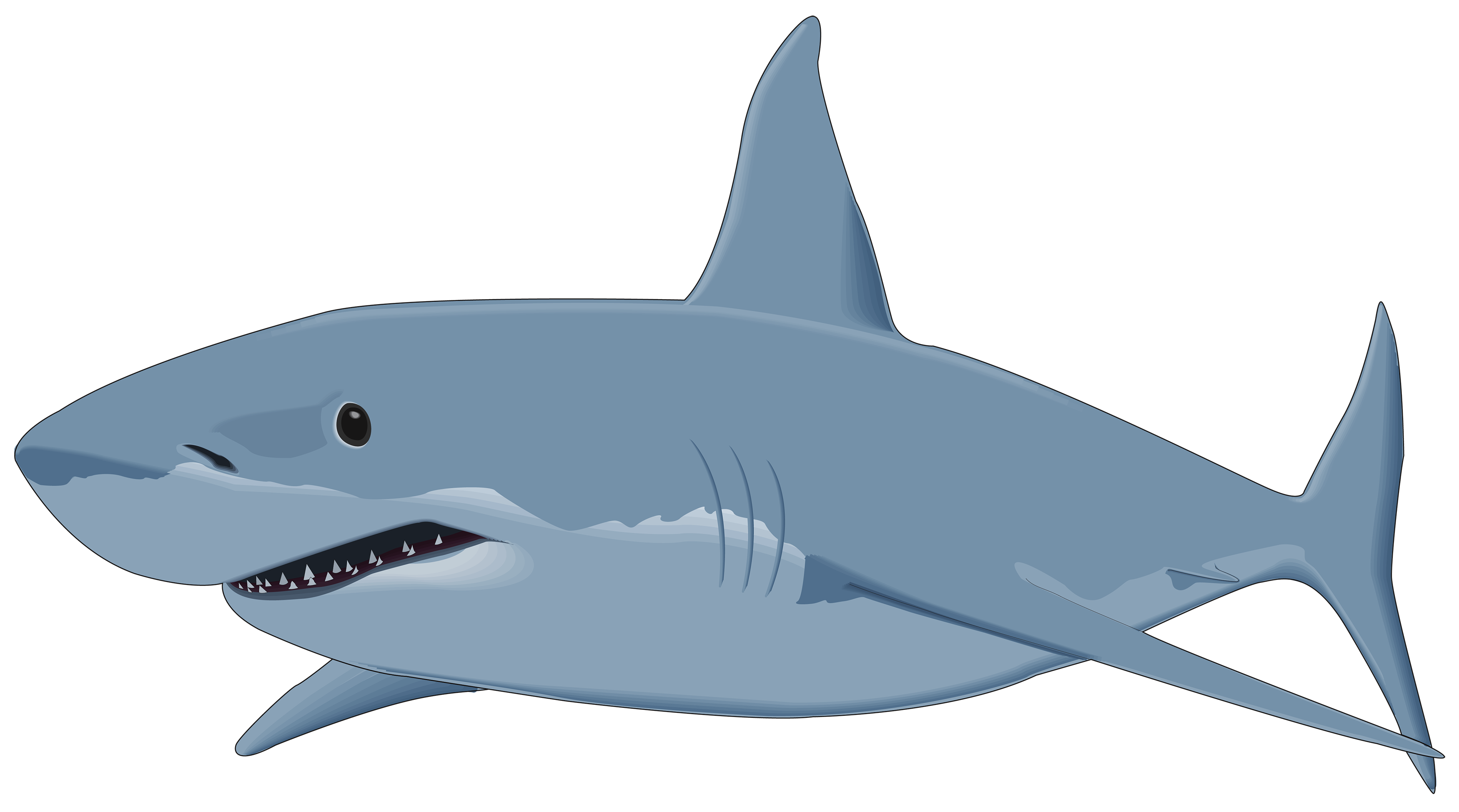 Great white shark Isurus oxyrinchus Clip art.