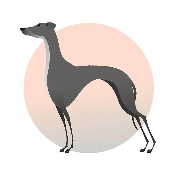 Best Greyhound Illustrations, Royalty.