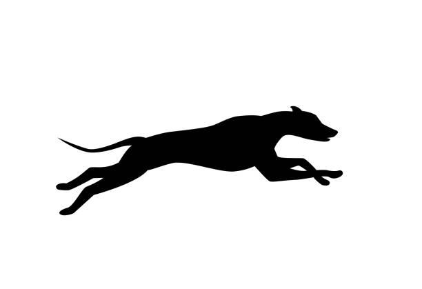 Best Greyhound Illustrations, Royalty.