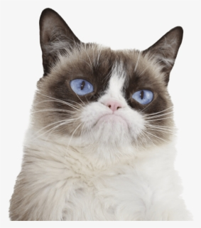 Free Grumpy Cat Clip Art with No Background.