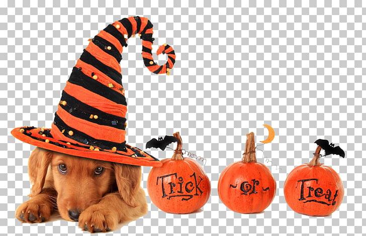 Dog Halloween Trick.