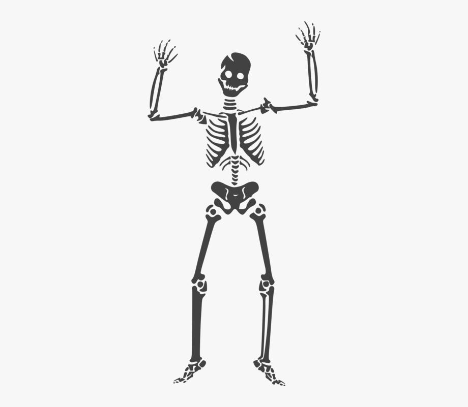 Human Skeleton Skull Anatomy Human Body.