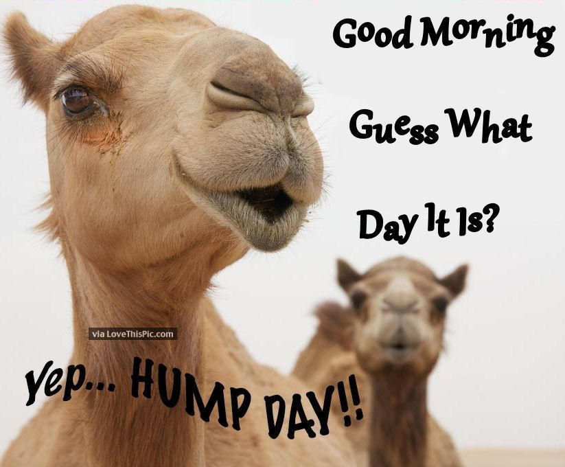 Good Morning Guess What Day It Is. Yep Hump Day!.