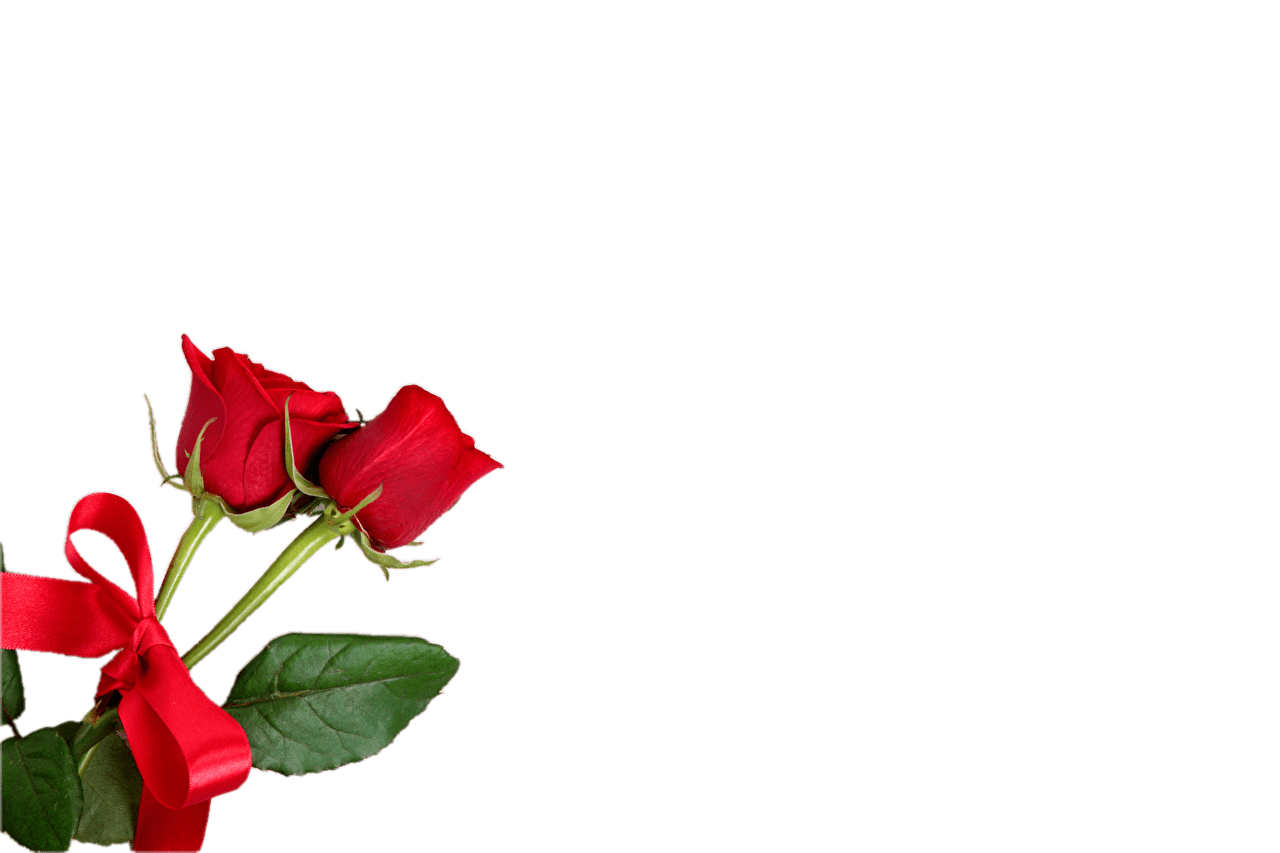 Red Rose HD Transparent PNG Images [Free Download].