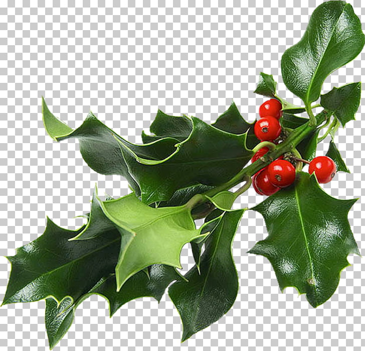 Christmas and holiday season Mistletoe Christmas decoration.