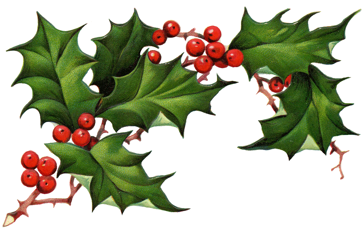 Garland clipart holly and ivy, Garland holly and ivy.
