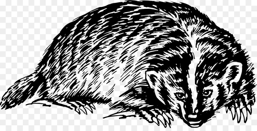European badger Honey badger Clip art.