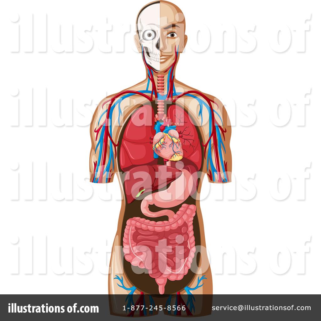 Anatomy Clipart #1445817.