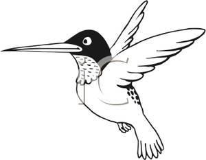 Free hummingbird clipart black and white 2 » Clipart Portal.