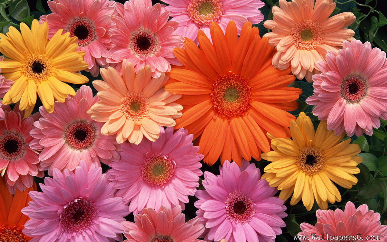 Free Download Of Images Of Flowers.