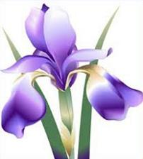 Free Iris Cliparts, Download Free Clip Art, Free Clip Art on.