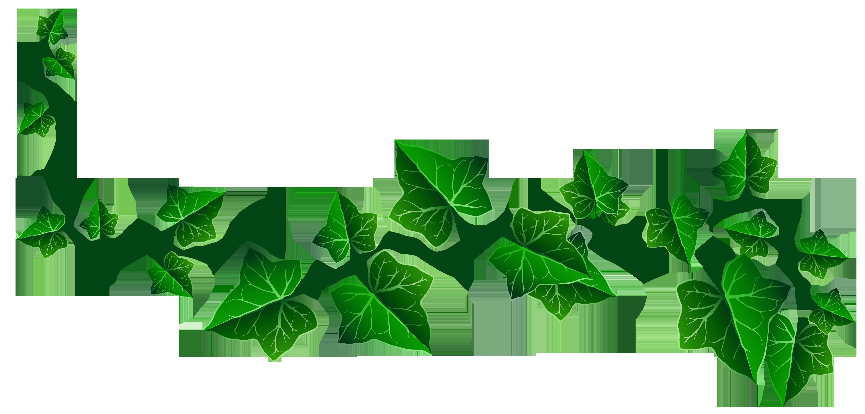 Ivy Vine Clipart.
