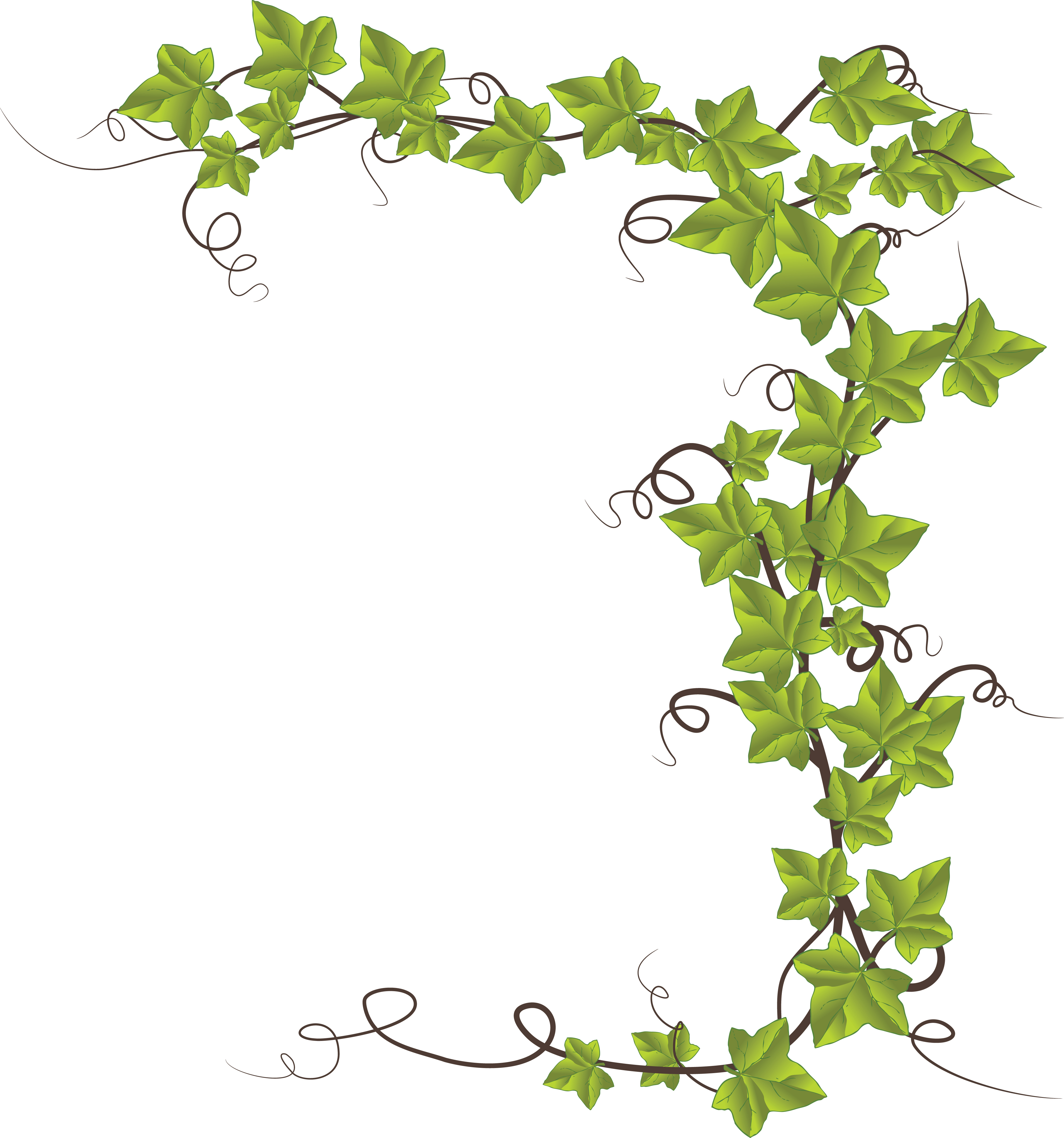 991 Ivy free clipart.