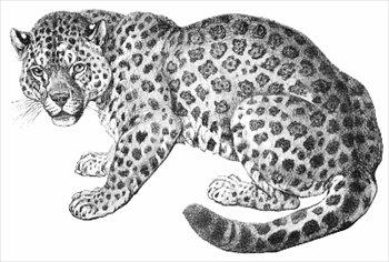 Free Jaguars Clipart.