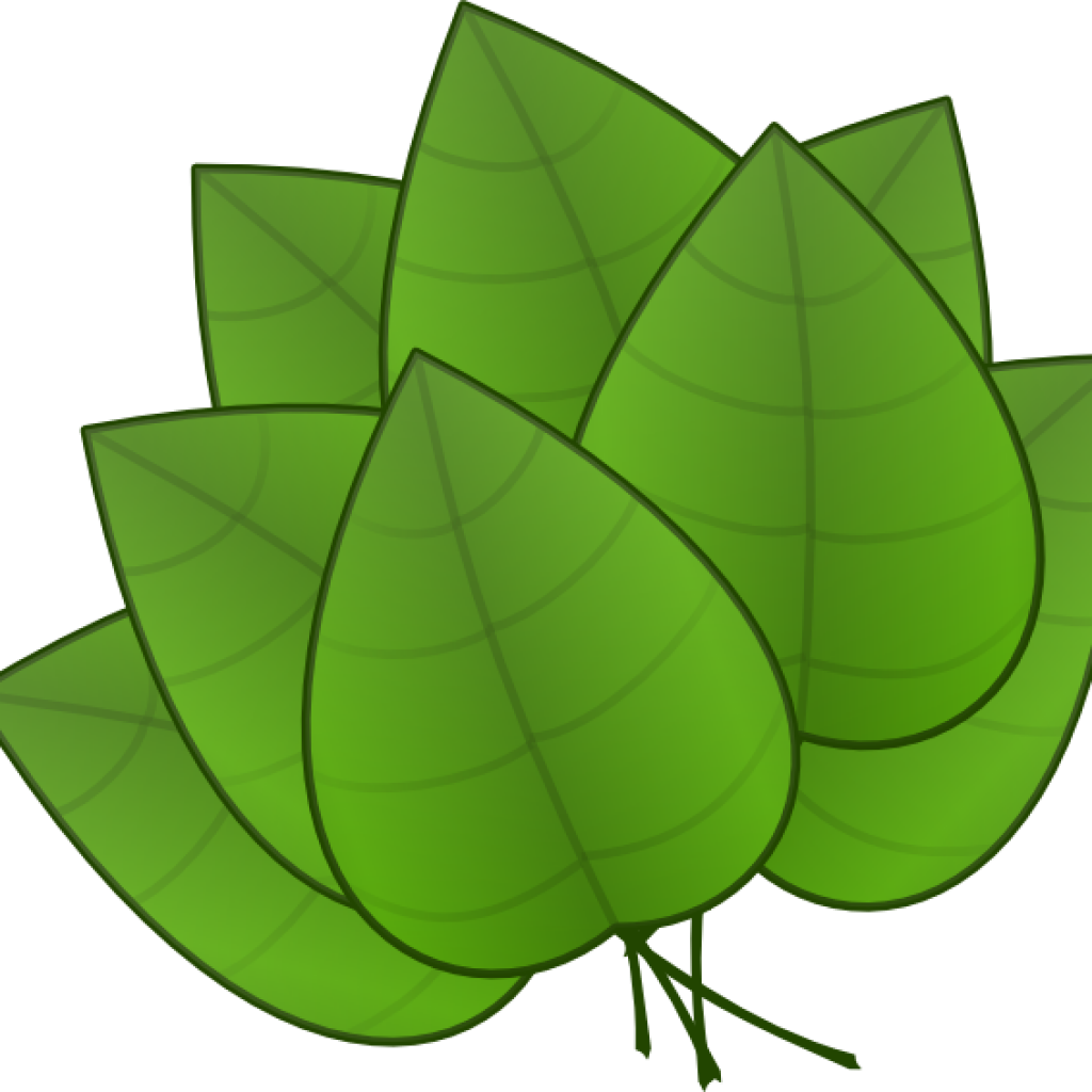 Jungle Leaves Clipart Jungle Leaves Clipart Free Jungle.