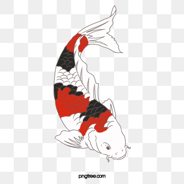Koi Clipart Png, Vector, PSD, and Clipart With Transparent.