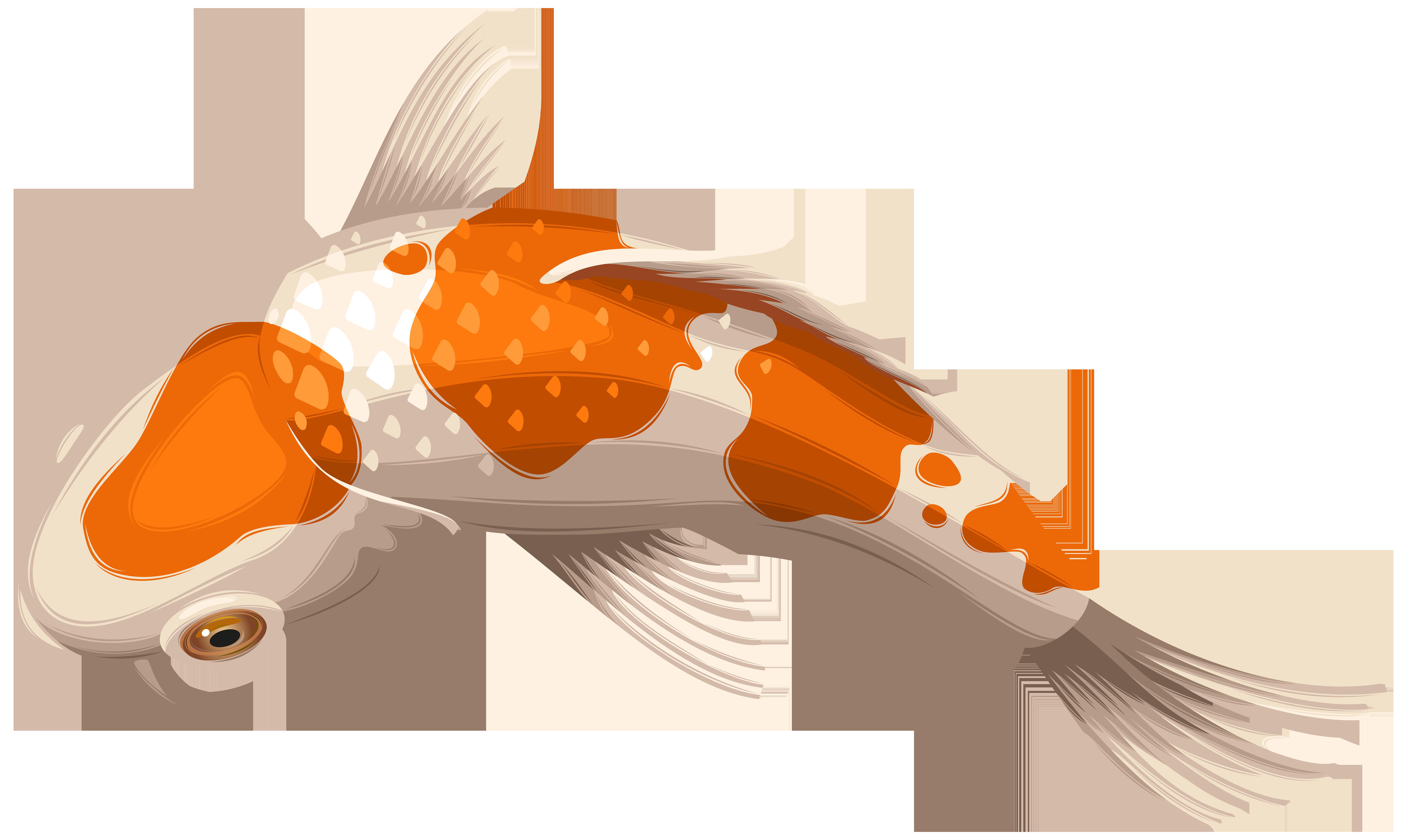 Koi Showa Goldfish Clip art.
