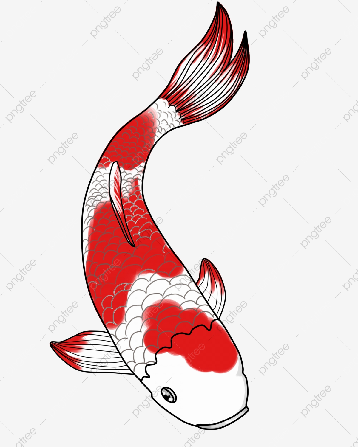 Red Koi, Goldfish, Aquarium, Koi PNG Transparent Clipart Image and.