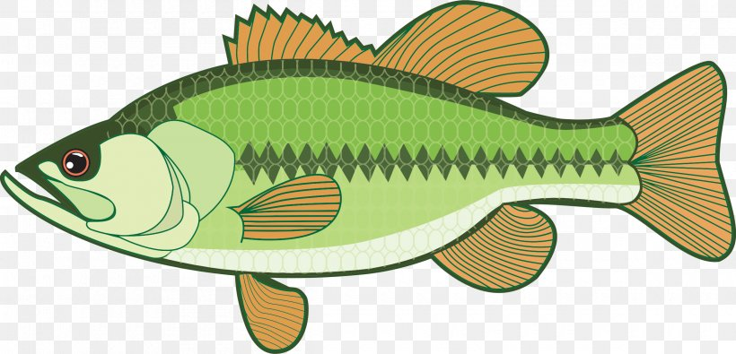 Largemouth Bass Clip Art, PNG, 2400x1158px, Bass, Animal.