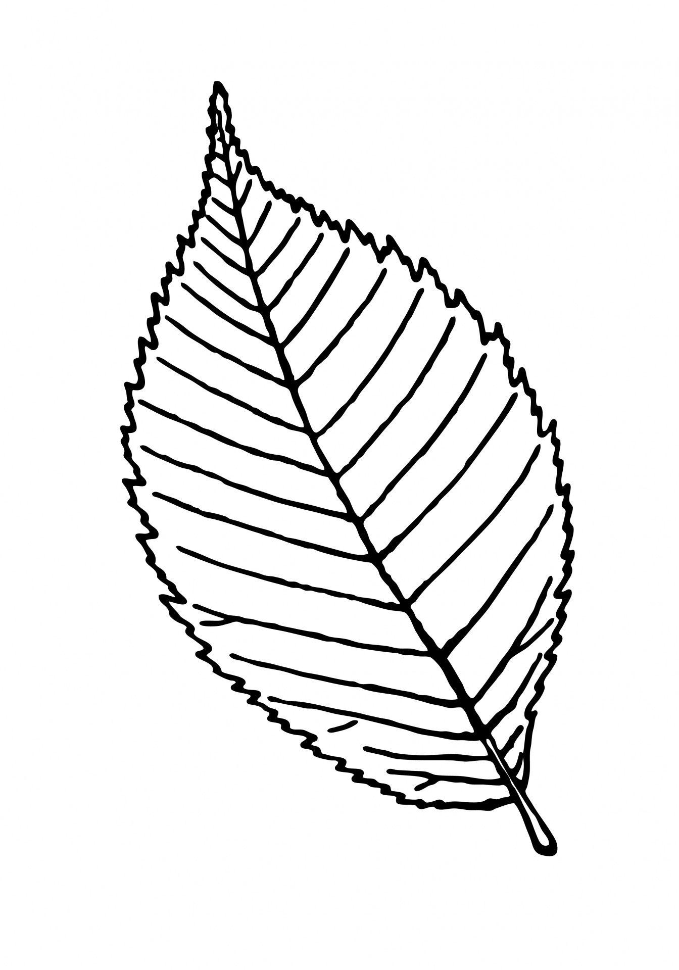 Leaf outline clipart illustration free.
