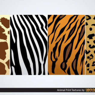 Zebra Clip Art Free Vector.