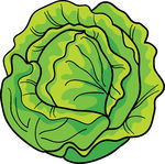 Free Lettuce Cliparts, Download Free Clip Art, Free Clip Art on.