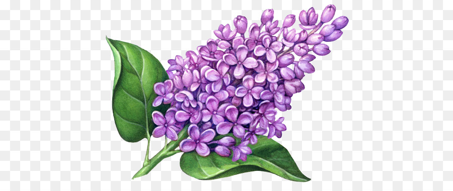 Purple Watercolor Flower clipart.