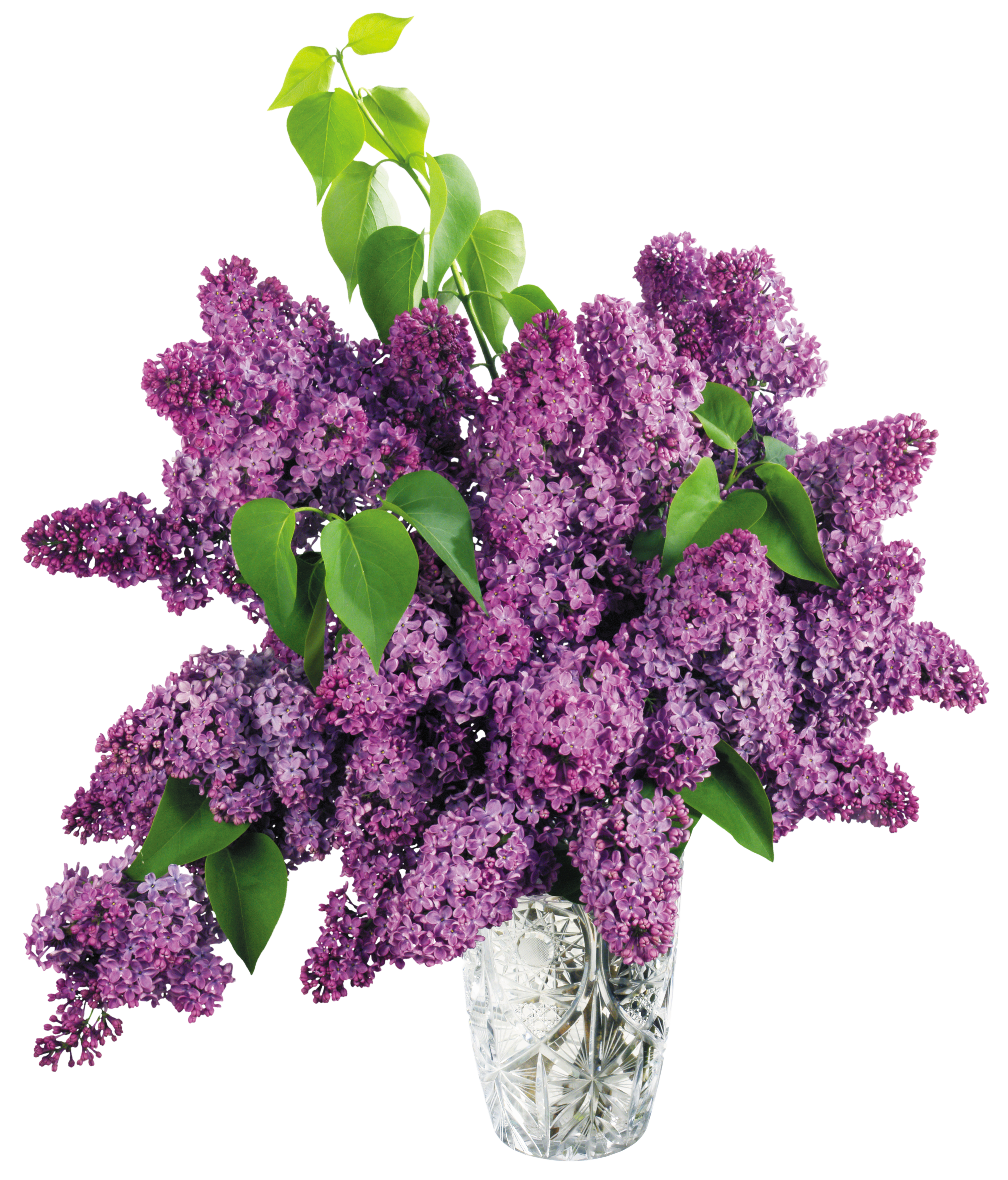 Vase with Purple Lilac PNG Clipart Picture.
