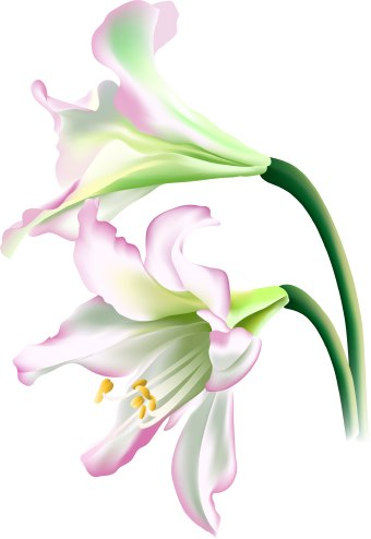Free lily clipart public domain flower clip art images and.