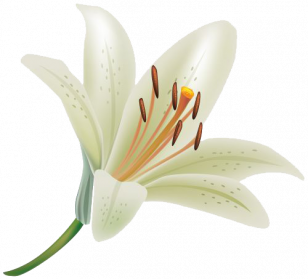 Lily Clipart Png.