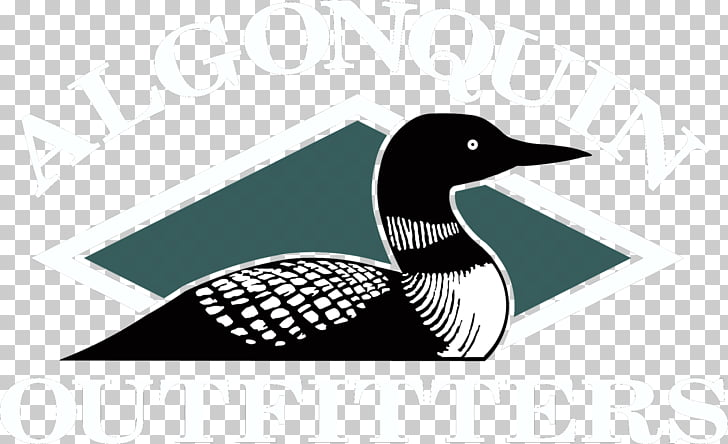 Common loon Drawing Bird Duck , cartoon lake water PNG.