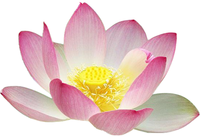Lotus flower clipart free.