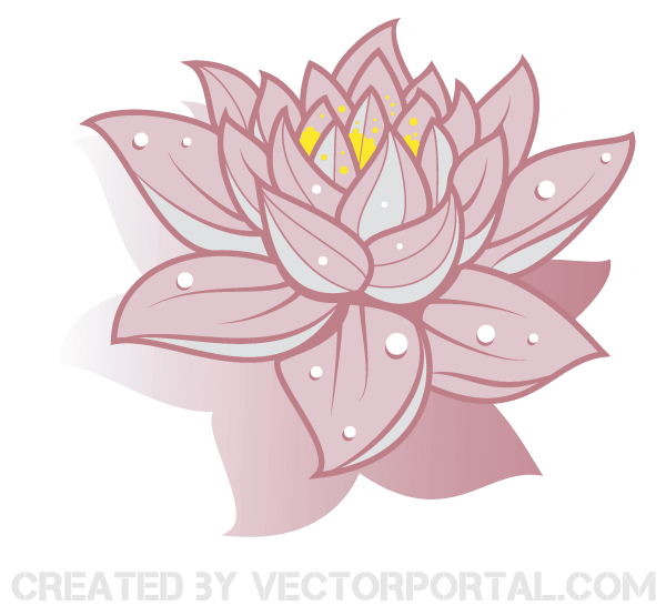 Lotus Flowers Vector.