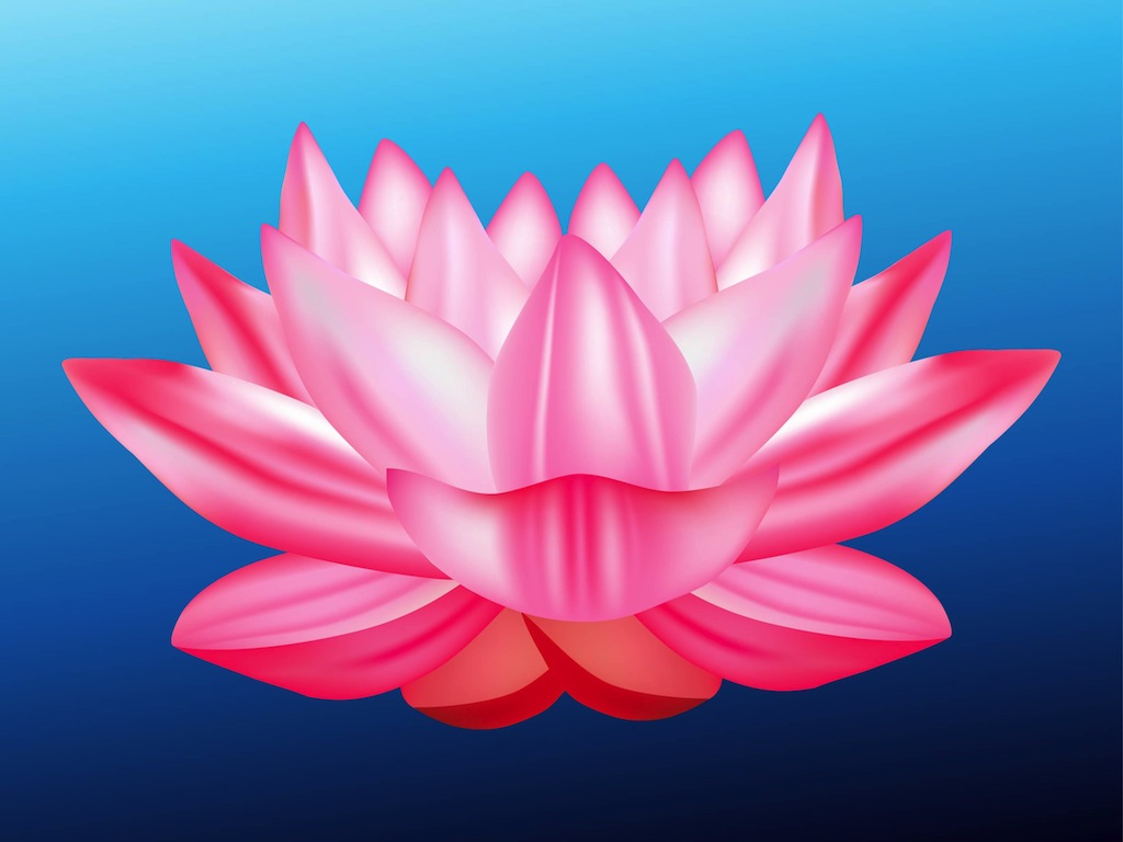 17 Best images about Lotus Flower on Pinterest.