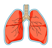 Free Lung Cliparts, Download Free Clip Art, Free Clip Art on.