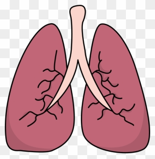 Free PNG Lungs Clip Art Download.