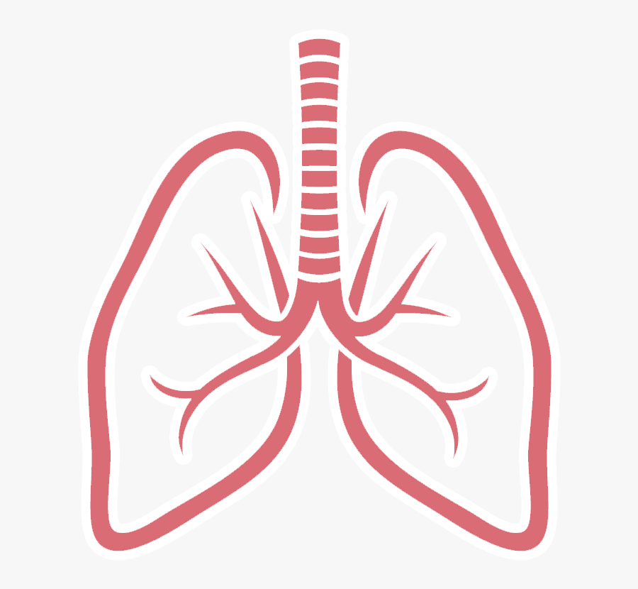 Lungs Png Picture.