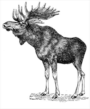 Free Moose Clipart Pictures.