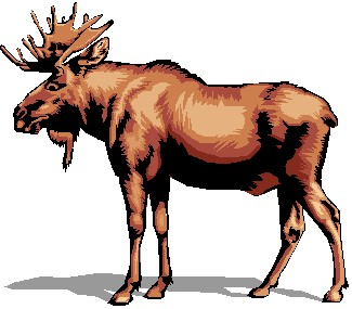 Image of moose clipart 9 clip art images free for 2.